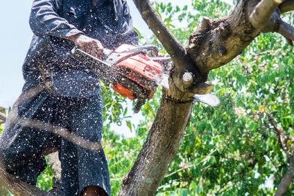 Mann benutzt Kettensäge zum fällen eines Baums